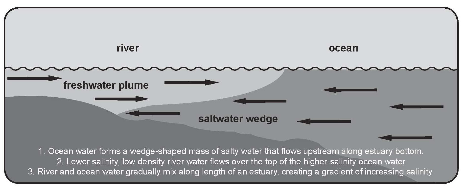 Illustrative example of a salt wedge phenomenon