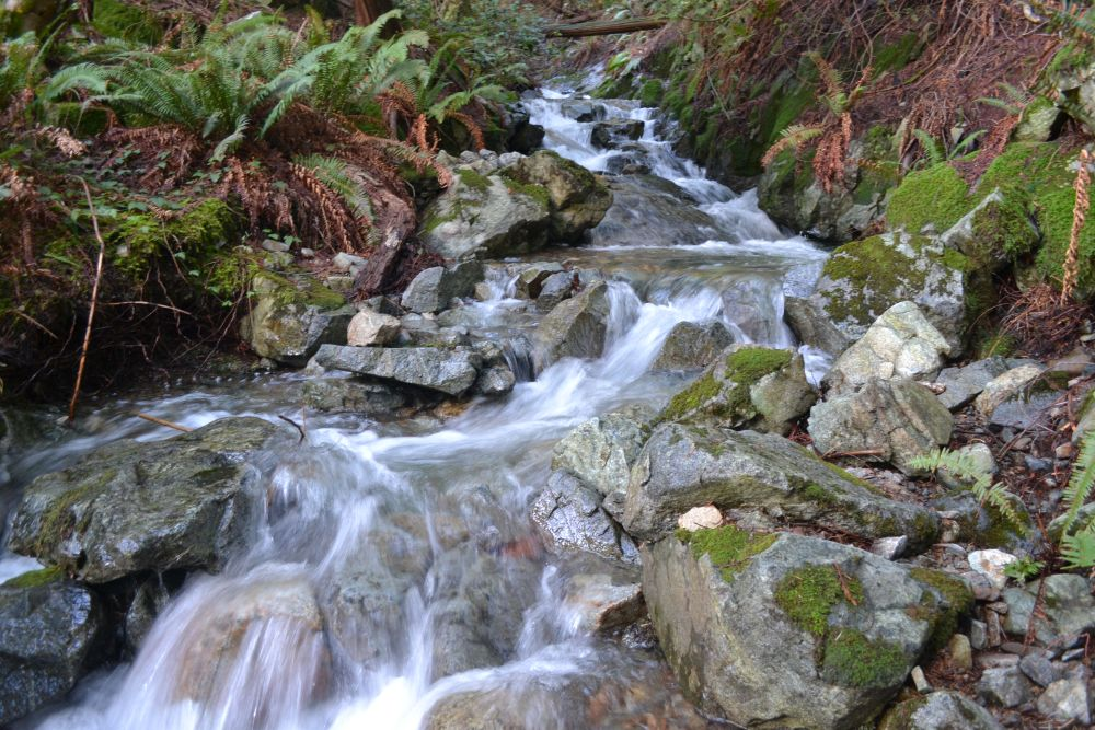 A creek near author Kim Stephens' property on Bowen Island, BC