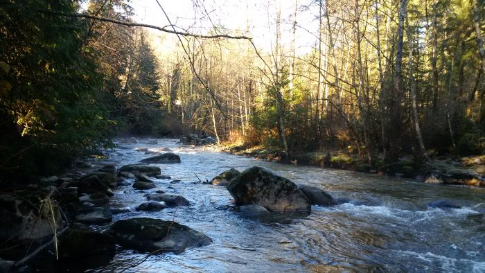 Lower Coquitlam River