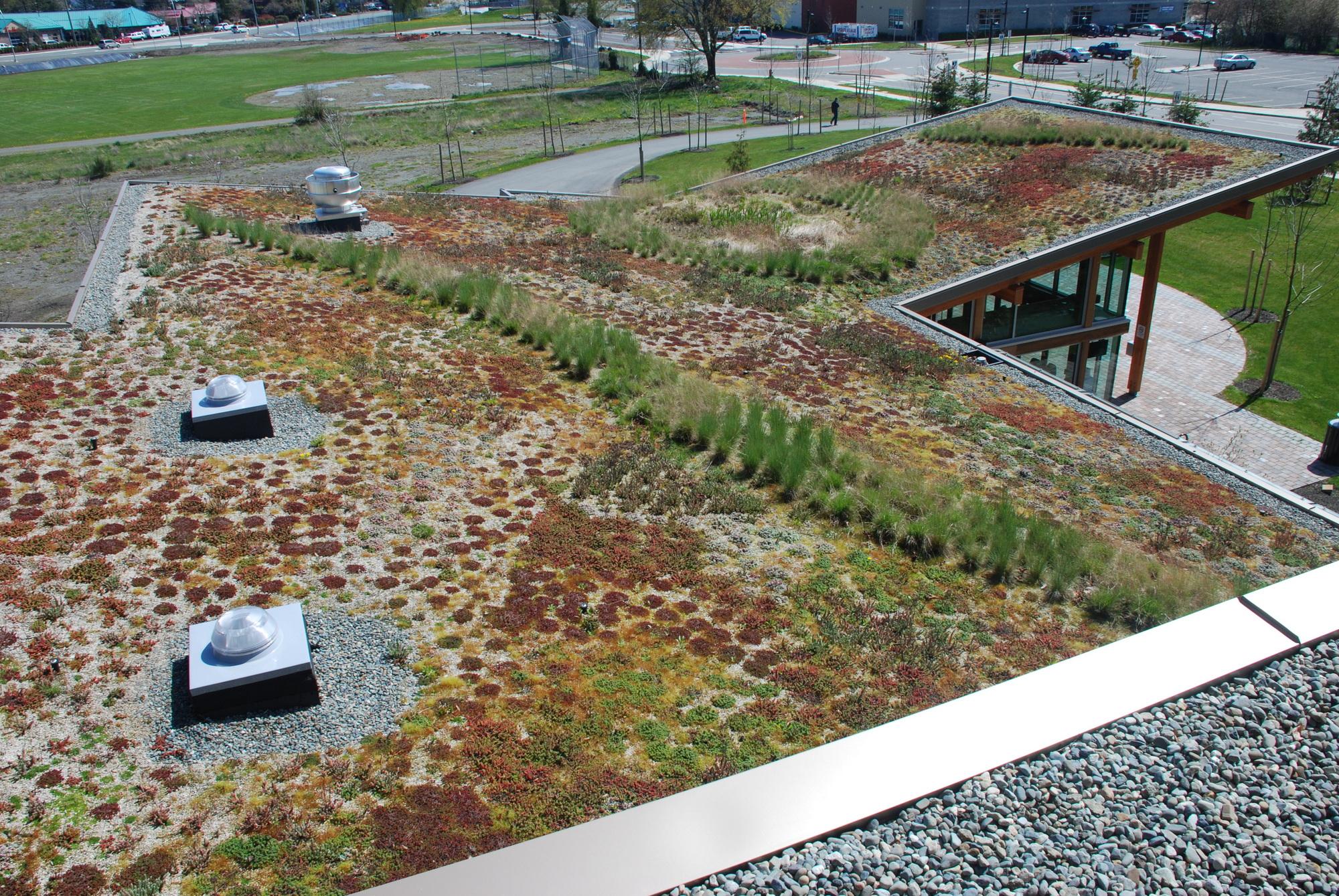 Green Roofs In Nanaimo A Unique Partnership Has Precedent