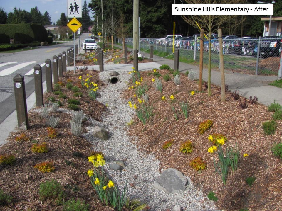 Sunshine Hills rain garden - after