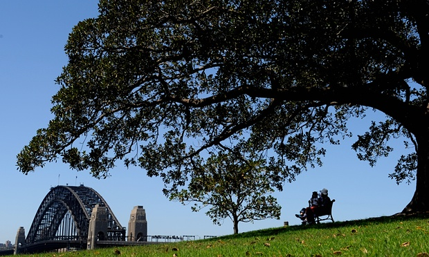 A Moreton Bay Fig tree creates a shady sanctuary in the heart of Sydney. The Australian Conservation Foundation says trees are the 'natural air-conditioners' of cities.