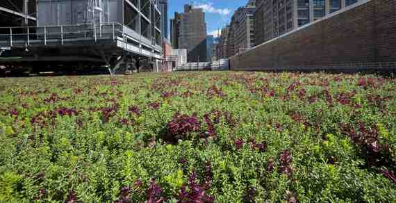 green roof2