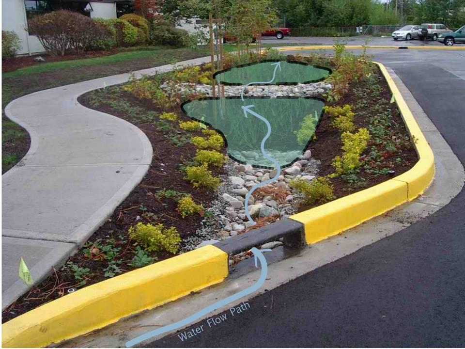 Are Rain Gardens Mini Toxic Cleanup Sites Rainwater Management