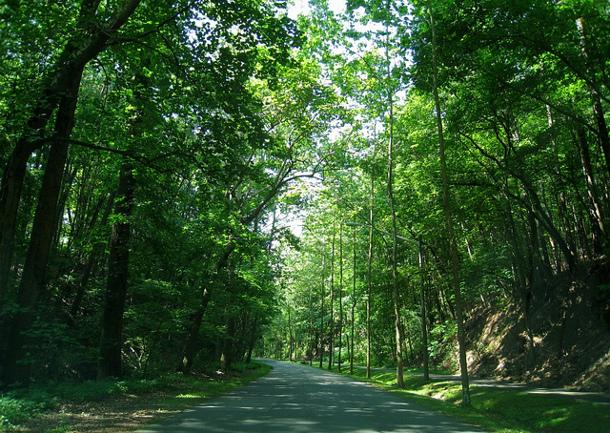 tree-lined-walkway