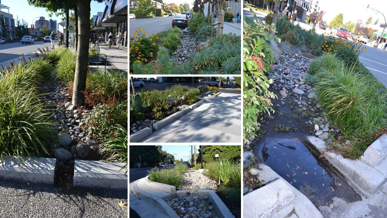 CNV_Rainwater Management & Rain Gardens_Oct2014_cover image_v2