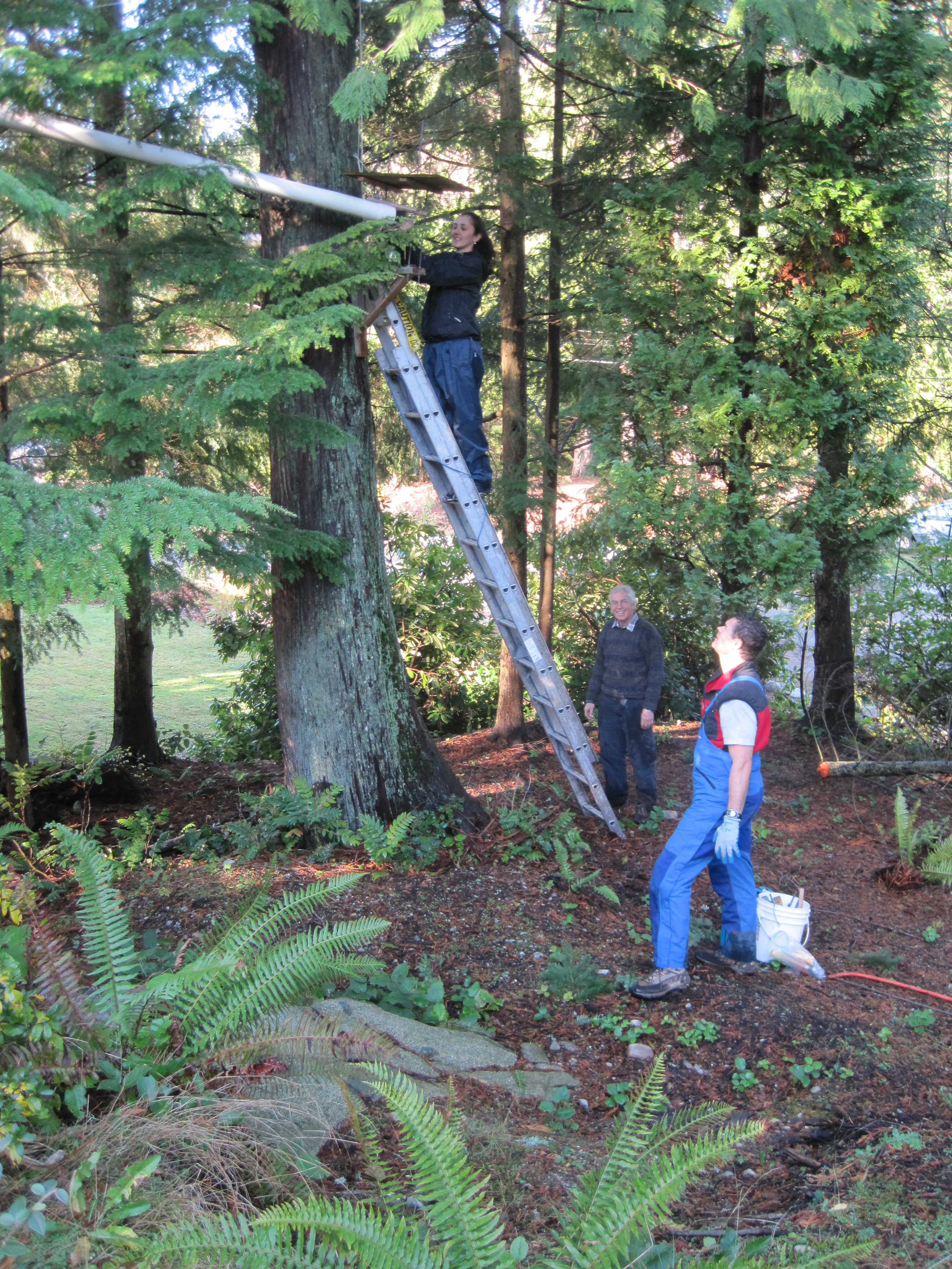 Canopy Monitoring Station installed in the Clovelly-Caulfeild neighbourhood of West Vancouver
