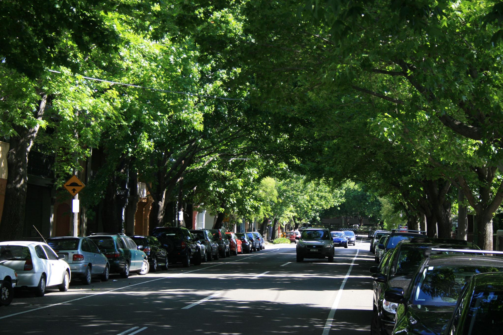 Sydney_tree canopy