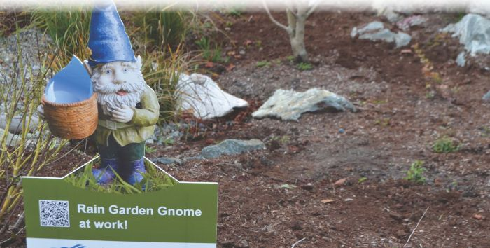 Rain garden gnome at work in the City of Victoria