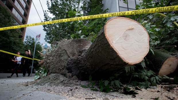 Aug 29, 2015 - Massive power outage and trees down in B.C due to extreme windstorm