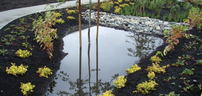 Sustainablerainwater management practices, such as rain gardens, allow cities to userain as a resource.This helps developed watersheds (such as inan urban landscape)mimic the function of natural systems.