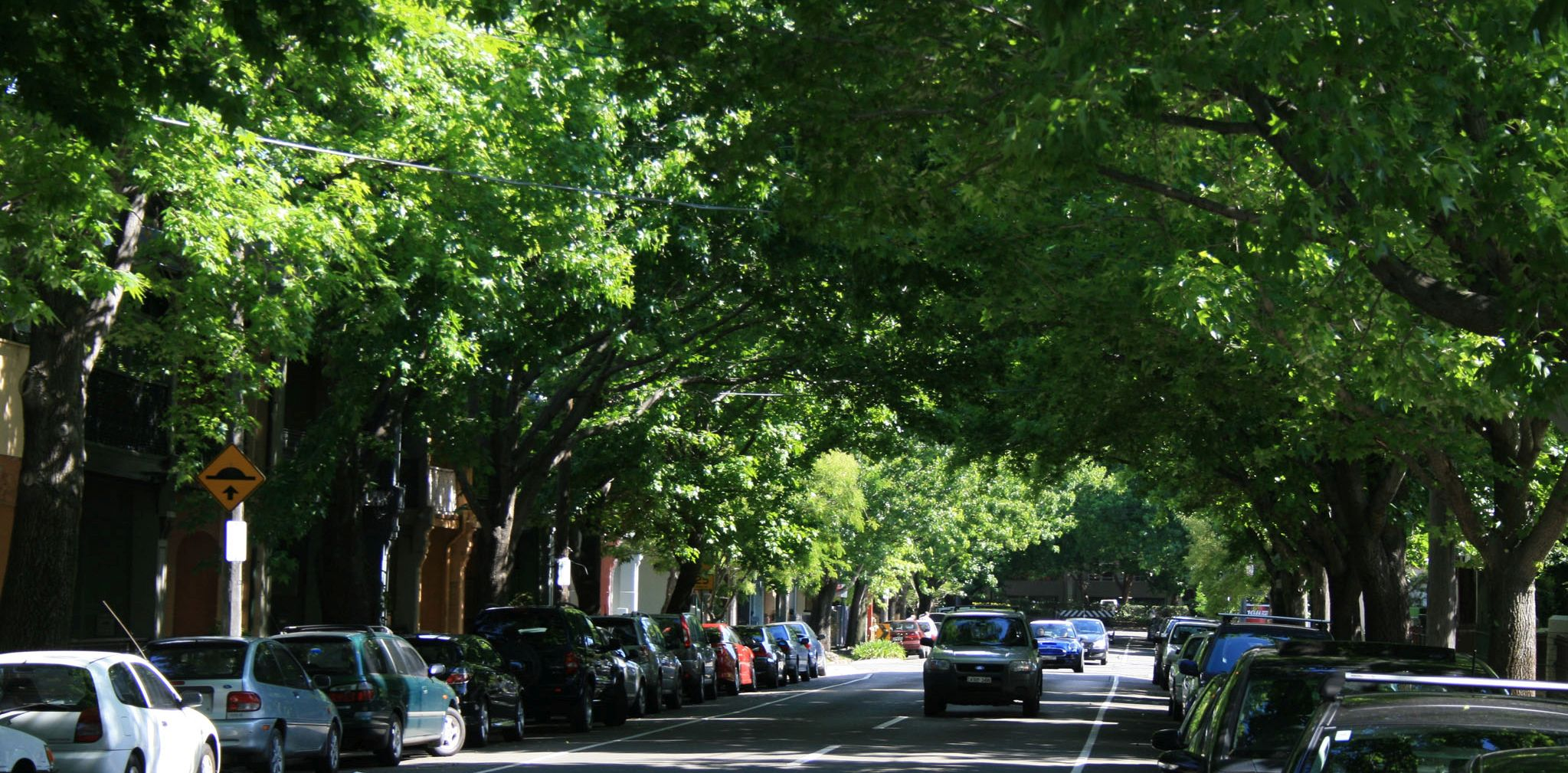 Sydney_tree canopy_trimmed
